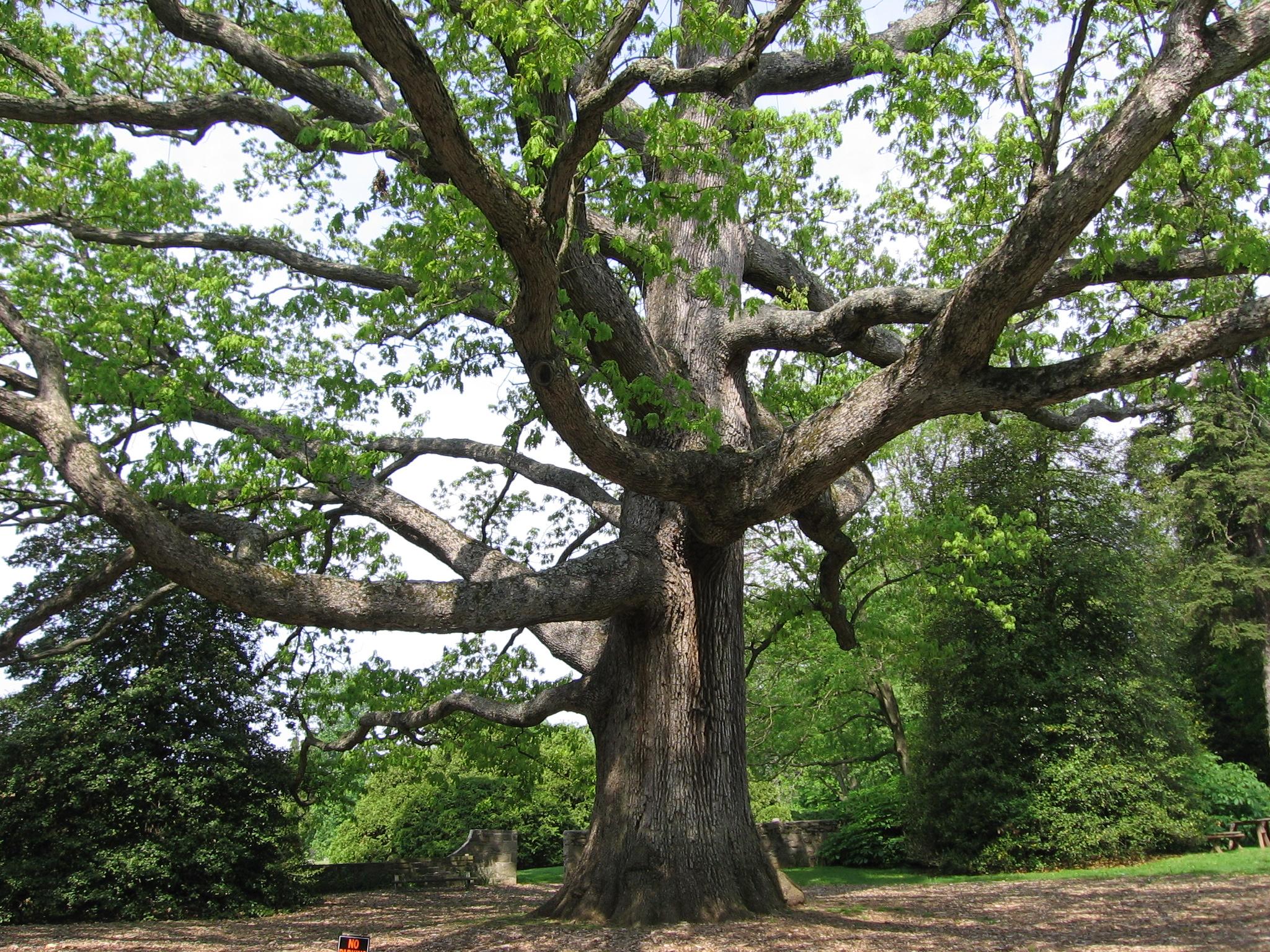 natural landscapes nursery oaks